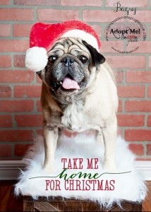 bugsy paola paladini photog holiday pic