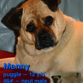 Manny (Bonded with Delilah)