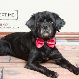 nikko adopt me pic