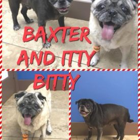 Baxter (Bonded with Itty Bitty)
