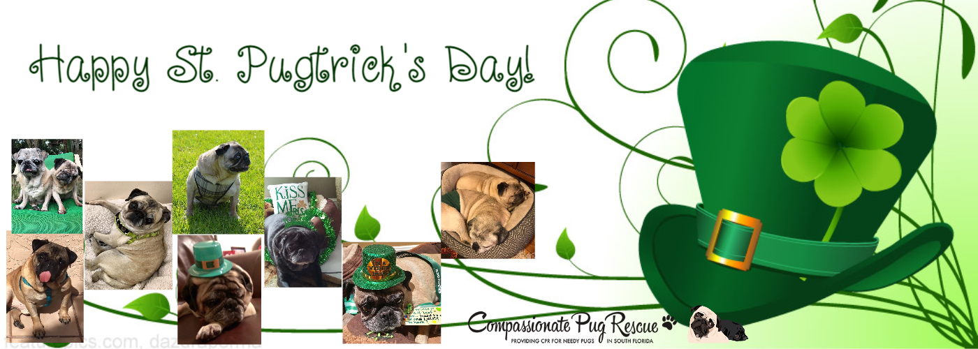 Happy St Pugtrick's Day!