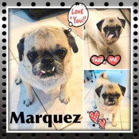 Marquez a/k/a BooBoo