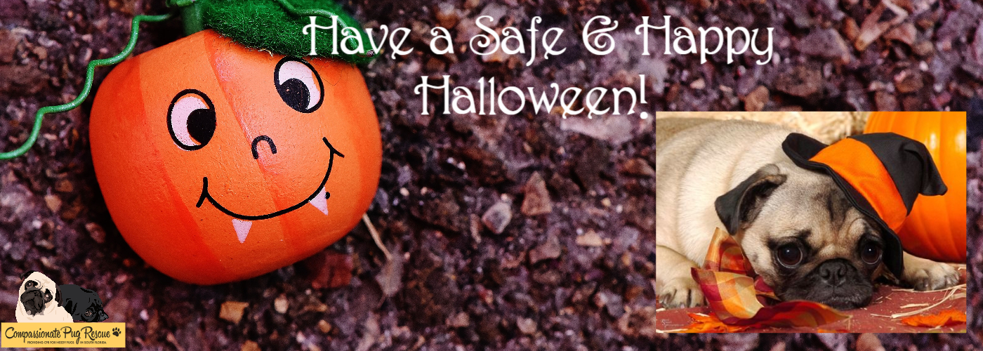 Have a Safe & Happy Halloween!